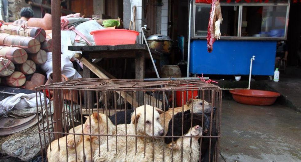 Lamentables imágenes de los mercados en China. (Imagen archivo)