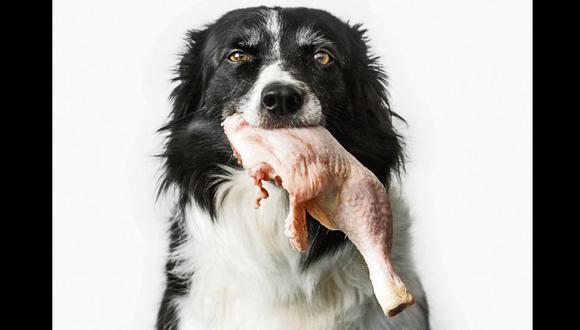 Mascotas: Experto aconseja en qué momendo darle de comer pollo y por qué jamás debes alimentarlo con hígado