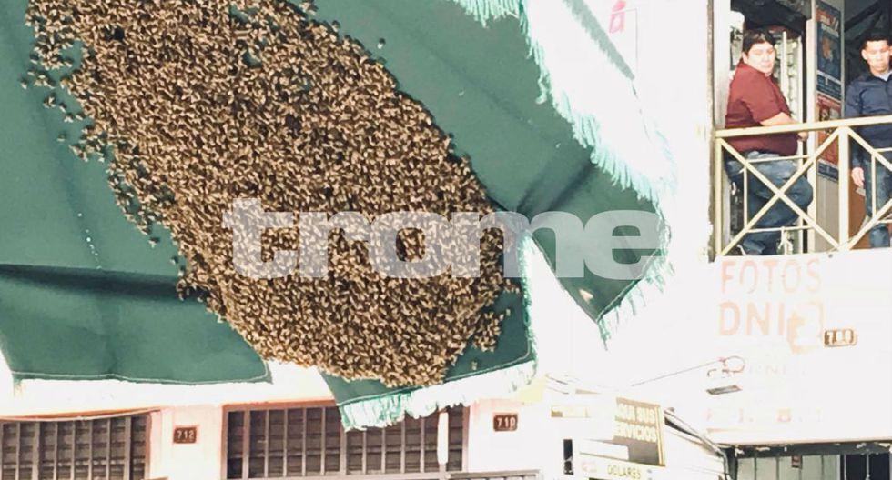 Ataque de abejas en el Centro de Lima. Foto: Trome