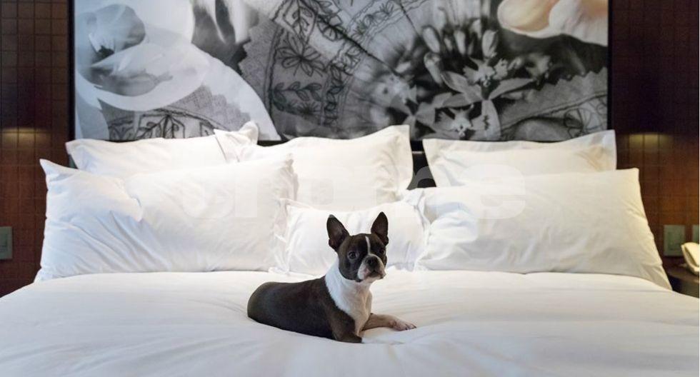 Este hotel 'amigable para mascotas' en Lima está dando la hora