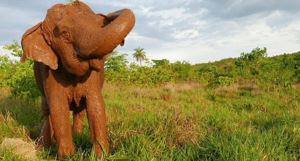 Ramba falleció por problema renal. (Foto: Santuario de Elefantes del Brasil)