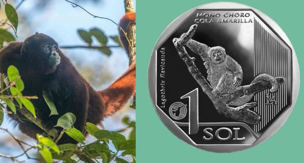 FOTO 8 | Un clásico de nuestra amazonía. El mono choro de cola amarilla fue la cara de la octava moneda. (Fuente: BCR)