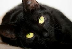 ¿Qué significa soñar con gatos ?¿Significado del gato negro?
