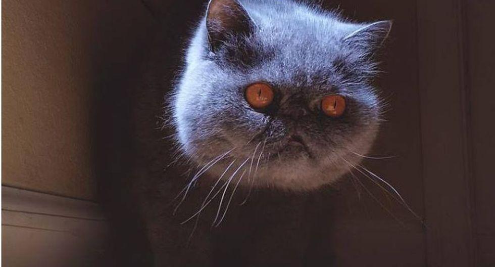 Gato sin cuerpo, Evil Cat