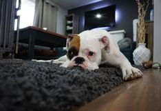 Mascotas: Ayuda a bajar de peso a tu perrito y mantenlo saludable para que viva mucho tiempo