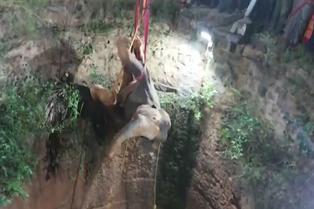 Mira el asombroso rescate de un elefante que cayó a pozo de 20 metros