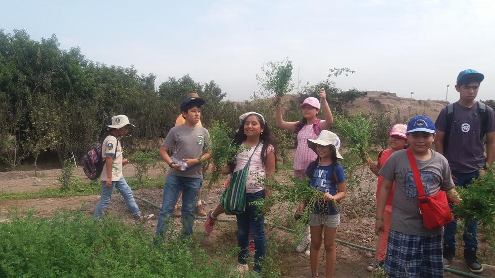 Las excavaciones arqueológicas de verano, reducidas casi a
