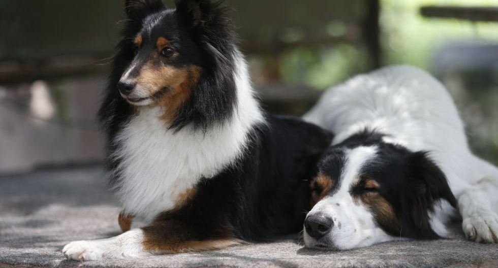 Esta es la explicación científica del porqué los perros orinan en las llantas de los autos | TROME