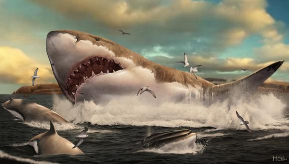 Imagen referencial. Estimaciones anteriores aseguran que el megalodón podía medir entre 15 y 18 metros como máximo. (AFP / METAZOA STUDIO / HUGO SALAIS)