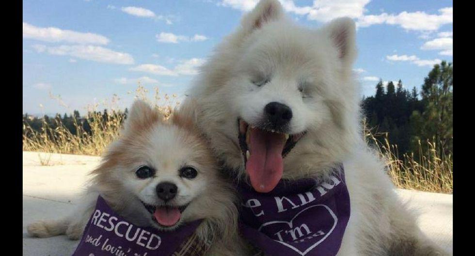 Mascotas: Perro ciego tiene a perrito como amigo y guía fiel [VIDEO]