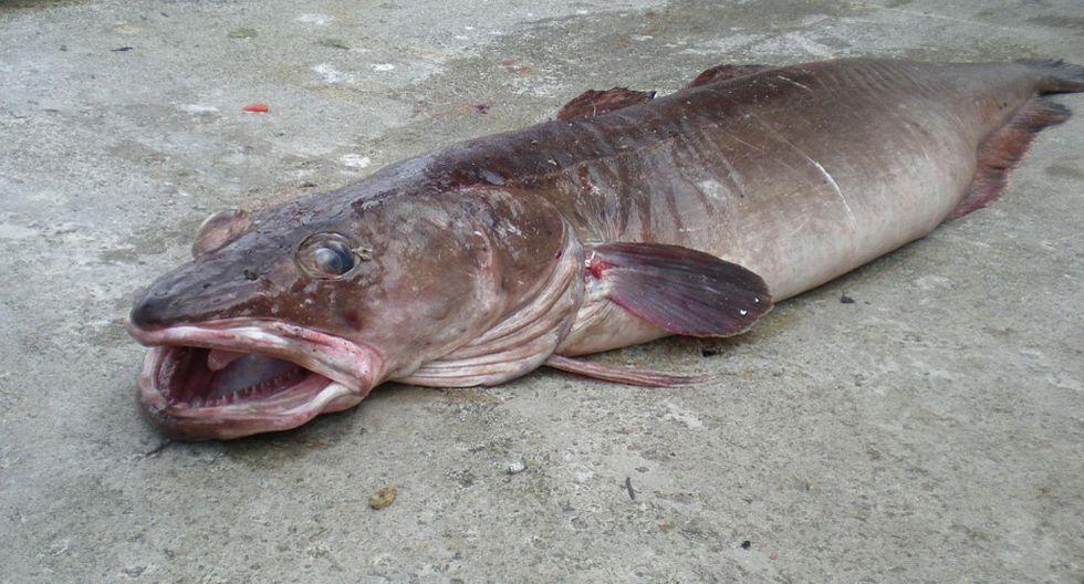 Pánico por agresivo pez que respira aire y devora todo lo que encuentra. (Foto: Referencial/Pixabay)