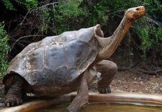 Diego, la tortuga semental que tuvo tanto sexo que salvó a toda su especie de la extinción, se retira