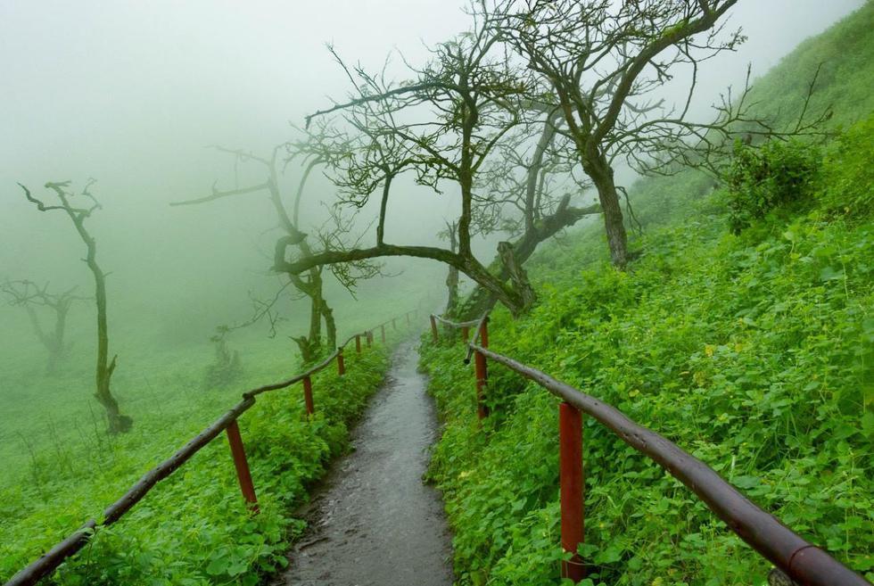 A dos horas de la ciudad de Lima se encuentra la Reserva Nacional de Lachay, un ecosistema único debido a la presencia de neblinas. Fotos: Facebook Lomas de Lachay