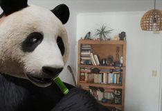 Así se activan los animales 3D de Google para que te diviertas durante la cuarentena