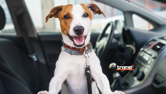 Conoce algunas recomendaciones para llevar a tu mascota en tu auto.