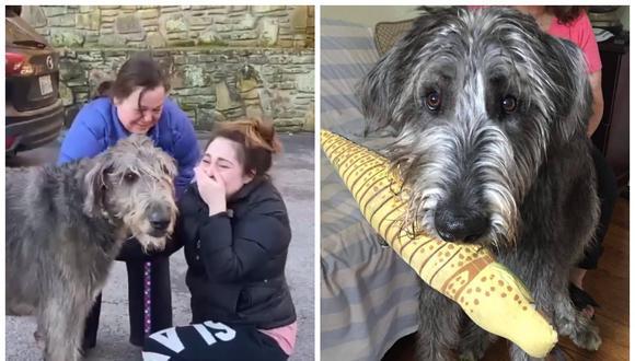 Familia en Estados Unidos se reencontró con su perro después de perderlo en un accidente. (Foto: Facebook | Meredith Luckett)