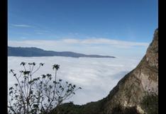 Bosques Nublados de Udima: un parque poco conocido en el norte peruano   FOTOS