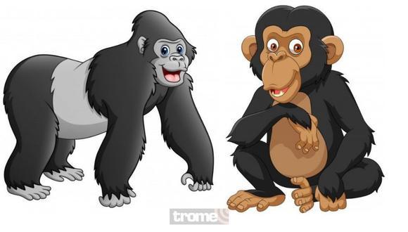¿Cuál es la diferencia entre simio, mono y primate? Aquí está la respuesta a esa pregunta.