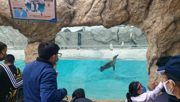 Esta semana, todos a visitar el Parque de las Leyendas (San Miguel).