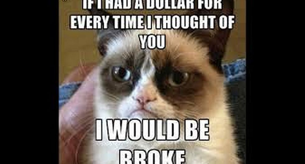 Memes de Grumpy Cat:La 'gata gruñona' tenía siempre un gesto molesto, parecía que todo le apestaba.
