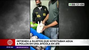 Ate: intervienen avícola clandestina donde se inyectaban pollos con agua sucia