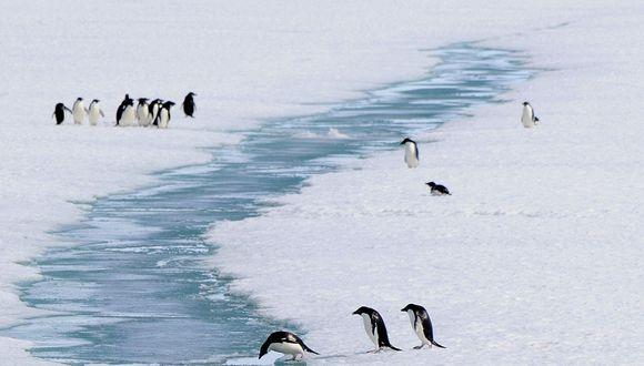 La Antártida siente la presencia del hombre de distintas formas. (Foto: AP)