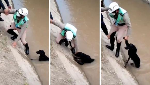 Mascota tuvo que estirar la pata para ser levantado del agua