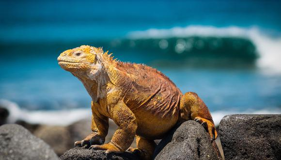 Son animales de sangre fría, habitan en zonas muy cálidas y tropicales. Foto: Pexels.