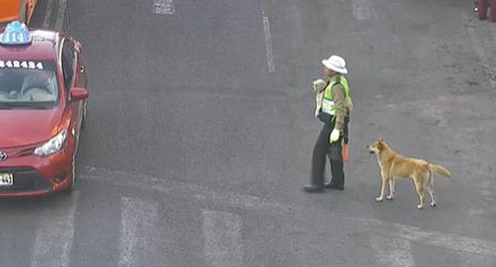 En la grabación se aprecia al agente paralizando el tránsito vehicular para que los canes puedan cruzar la vía sin ningún problema. (Foto: Captura Video)