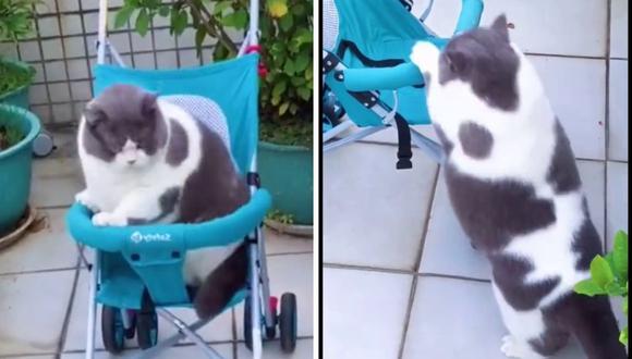 Varios usuarios manifestaron desear conocer el nombre de la mascota. (Foto: @dobby.p   TikTok)