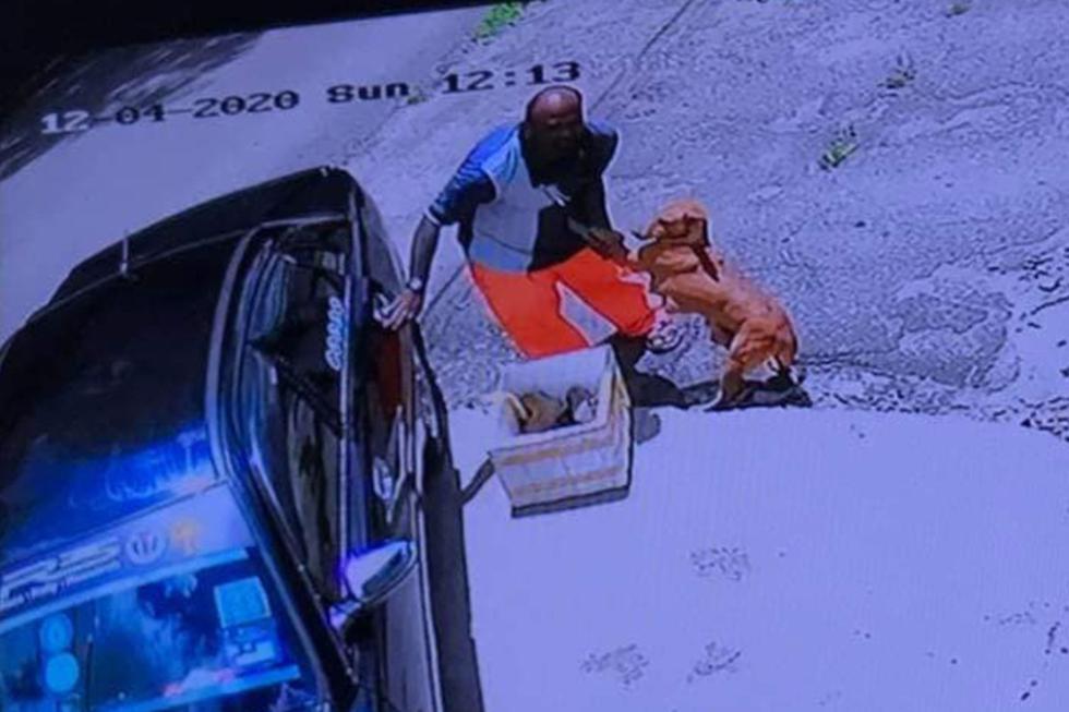 La perrita no quería que el hombre la dejara sola con sus cachorros. (Facebook: Persuatan Haiwan Malaysia - Malaysia Animal Association)