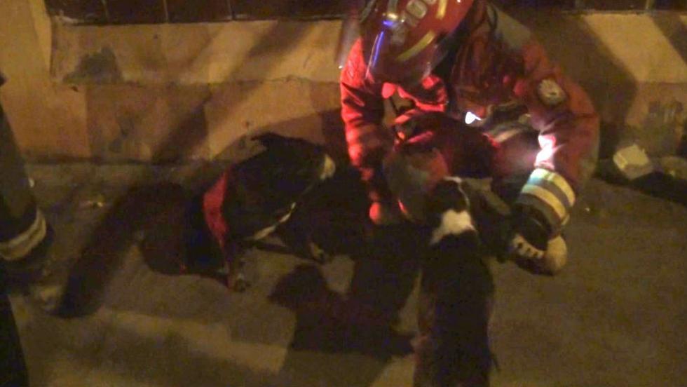 Salvan a perrita y sus cachorros de incendio en Surco. (Difusión)