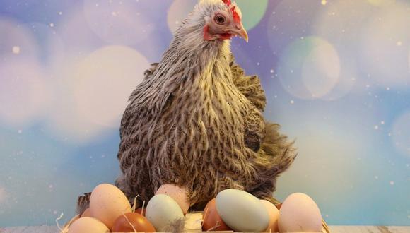 Soñar con huevos de gallina