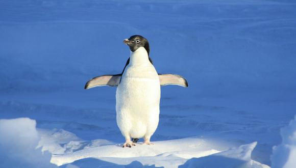 No se sabe con certeza si este implemento fue el causante del deceso del pingüino, pero se cree que lo debilitó bastante durante un buen tiempo. (Foto: Referencial / Pixabay)