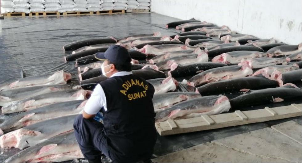 Toneladas de carne de tiburón iban a entrar al Perú en cargamento  de especies marinas | FOTOS