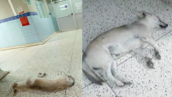 'Chato', el perrito que espera hace un mes a su dueño en hospital de Huacho sin saber que ya falleció | TROME