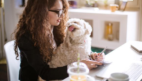 Hay otros aspectos que se deben considerar antes de adoptar una mascota.