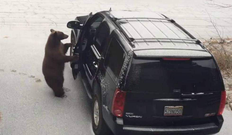 Se volvió viral en YouTube el instante en que un oso abre sin esfuerzo la puerta de un coche. (Foto: Captura)
