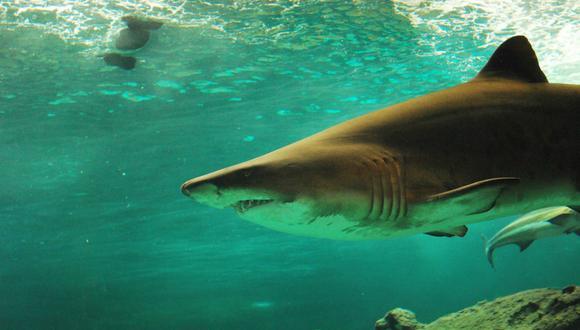 Se volvió viral en Facebook el ataque de un tiburón a una foca cuando unos turistas pasaban cerca. (Foto: Referencial/Pixabay)