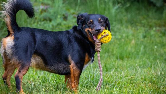 Nunca hay pierde con los juguetes que tu perro atrapa. (Foto: Pexels)