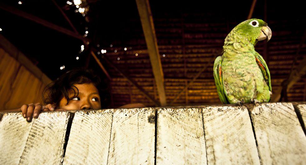 Pucallpa tiene es uno de los pocos lugares en el Perú donde puedes combinar la naturaleza con la modernidad. (Foto: GEC)