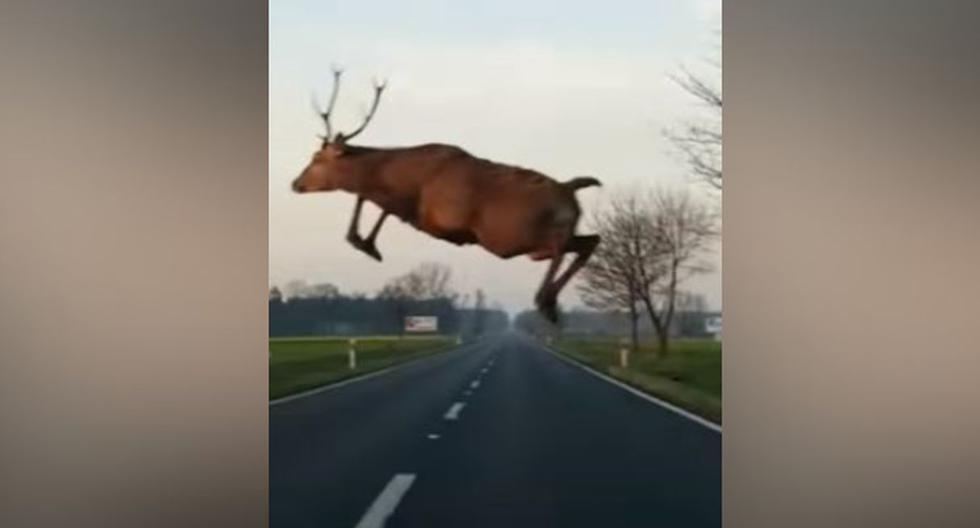El venado quería cruzar la carretera rápidamente y no le importó que un auto pasara a una gran velocidad. (YouTube: ViralHog)