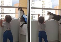 """Gato evita que un bebé se suba al balcón y es llamado """"héroe"""" por muchos en las redes"""