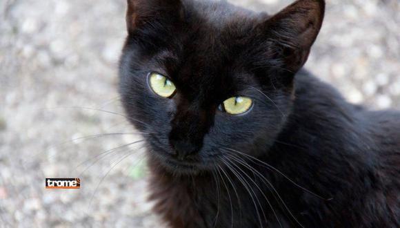 ¿Qué significado tiene soñar con gatos negros? Te lo contamos.