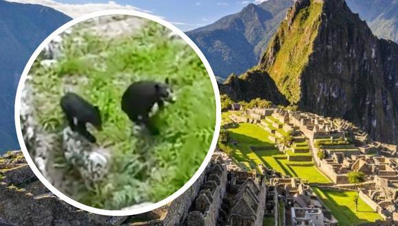 Según los especialistas, la disminución en el tránsito de turistas debido a la pandemia, habría ocasionado que los animales propios del lugar puedan recuperar el espacio (Foto: Mincul)