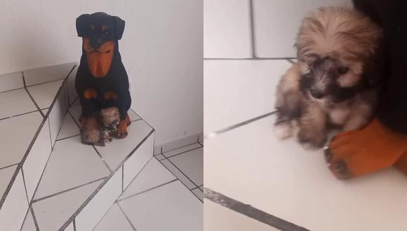 El dueño de un cachorro decidió grabar el continuo comportamiento de su mascota y, de paso, convertirlo en tendencia en las redes sociales. | Crédito: @isaacpapi90 / TIkTok