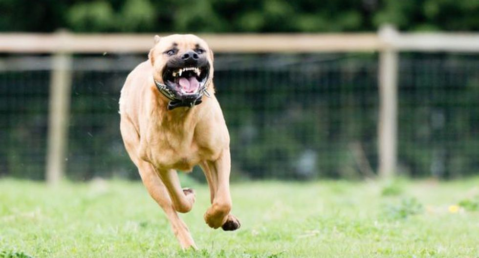 Cuando los perros gruñen están intentando comunicarse con nosotros y no necesariamente se trata de una agresión (Foto: /pixabay)