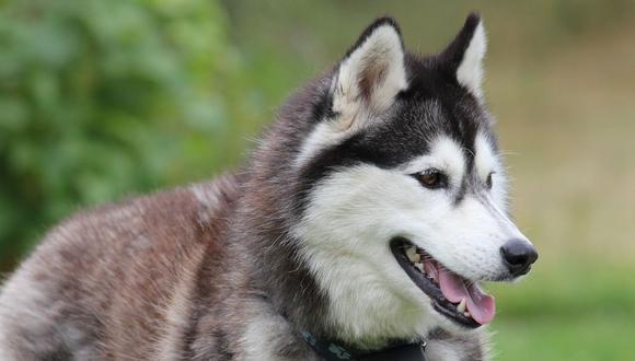 El can cautivó con su reacción a cientos de usuarios de YouTube. (Foto referencial - Pixabay)