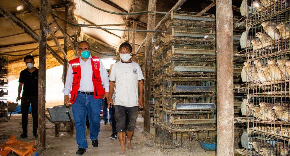 Ayudan a avicultor que iba regalar a sus codornices porque no tenía para darles de comer | Foto: Municipalidad de Lurín | TROME