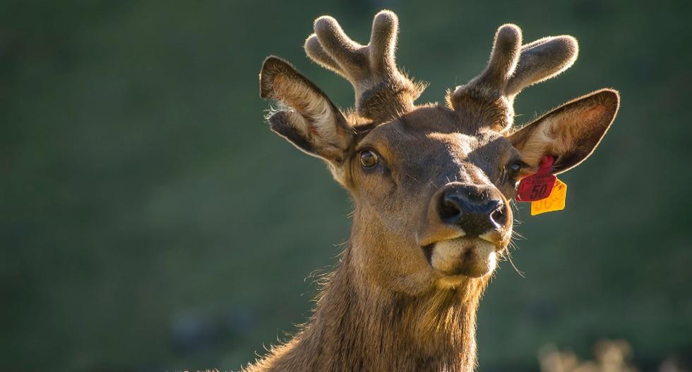 Al parecer el animal silvestre también quería refrescarse como los humanos. (Foto: Pixabay/Referencial)